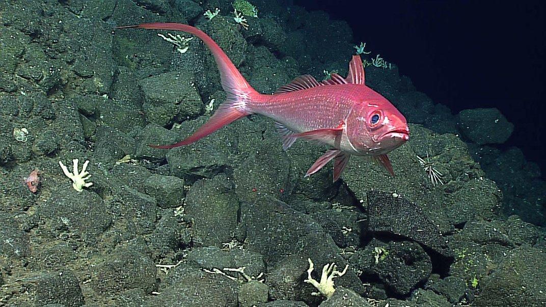Utilizando un sonar, el Okeanos genera imágenes de alta resolución del fondo marino.