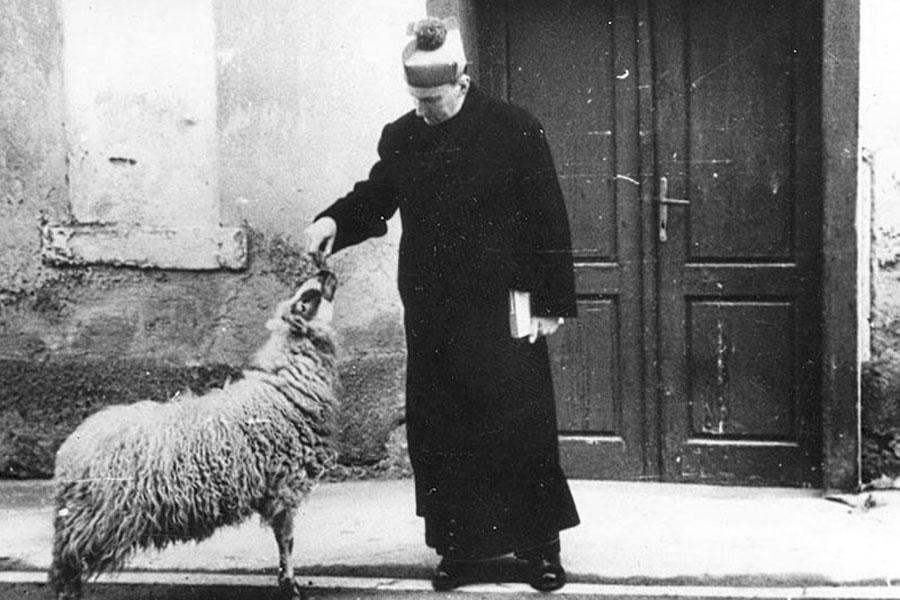 WEB-BLESSED-CARDINAL-STEPINAC-SHEEP-PD